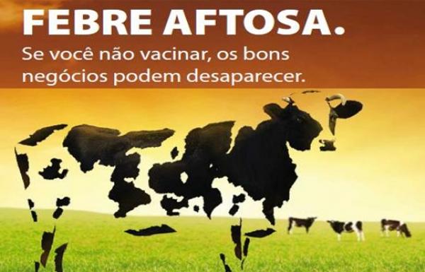 Resultado de imagem para febre aftosa vacina bubalinos bufalos